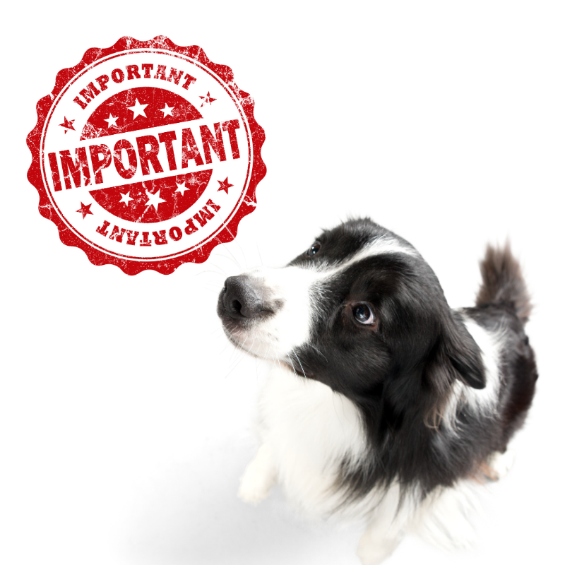 """assistance animals image: picture of a border collie looking updates and a red """"important"""" stamp set against a white background"""