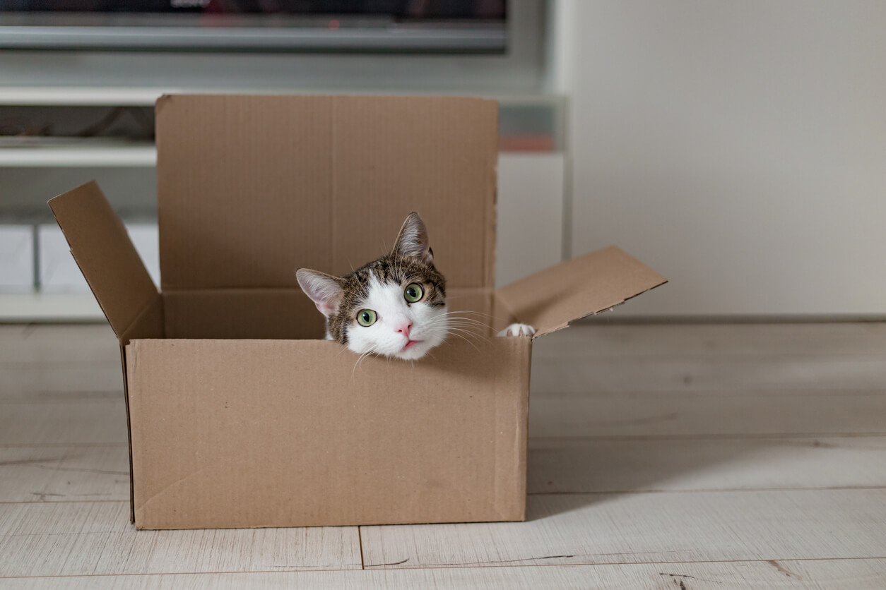 holdover tenant hero image: cat in a delivery box. The concept of buying a new home or relocation. Pet sitting in a cardboard box. Looking cat in a moving box
